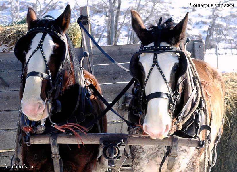 Конечно, верховых лошадей тоже