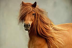 Глаза у лошади располагаются на боках головы