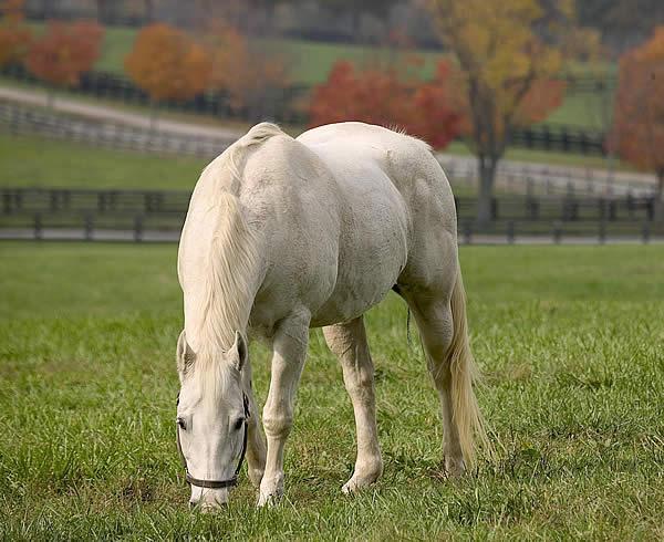 лошадь щиплет траву на выгуле