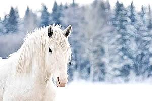 Картинки зимы лошади