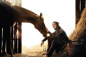 Работа конюхом в Корее